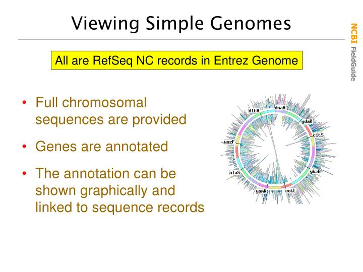 Viewing Simple Genomes