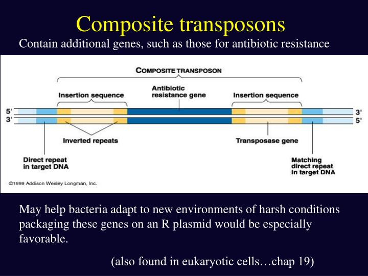 Composite transposons