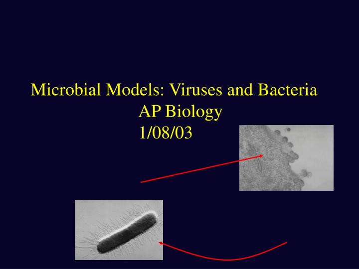 Microbial models viruses and bacteria ap biology 1 08 03