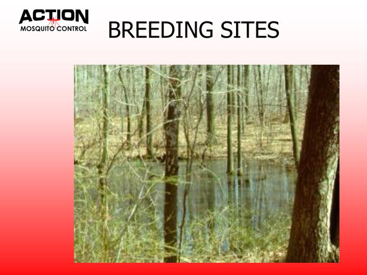 BREEDING SITES