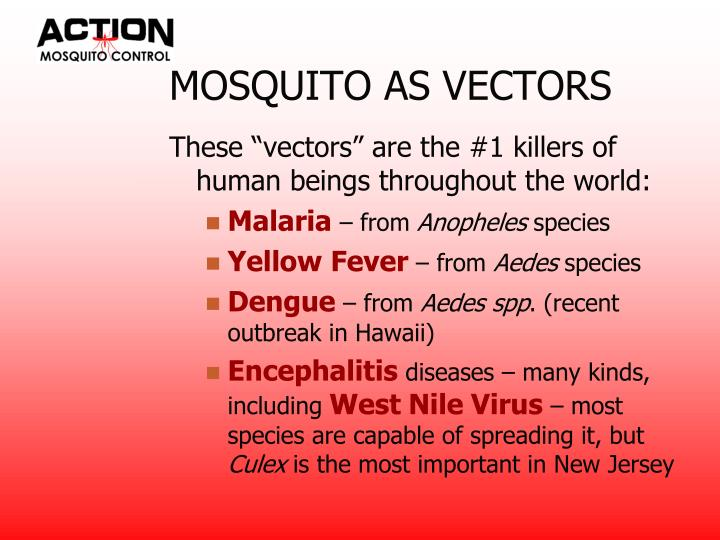 Mosquito as vectors