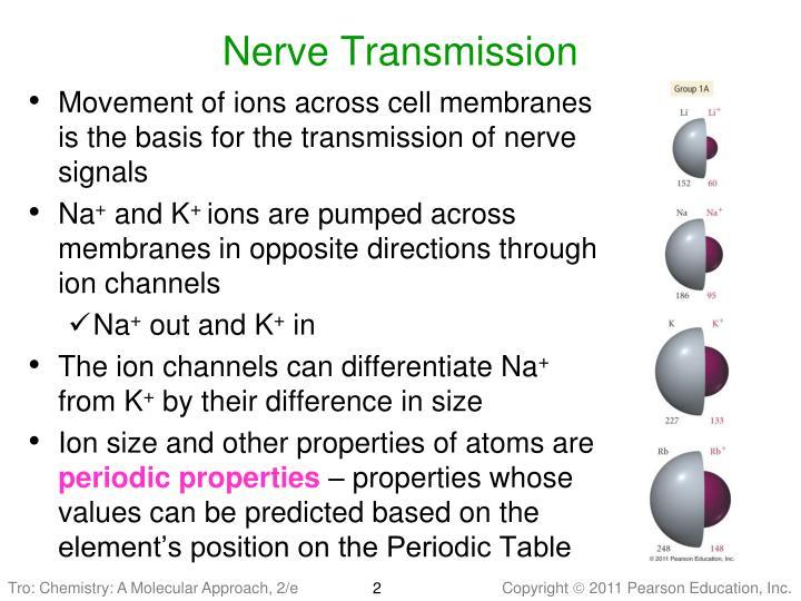Nerve Transmission
