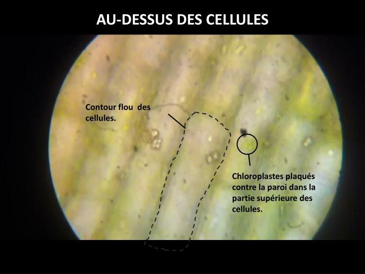 AU-DESSUS DES CELLULES