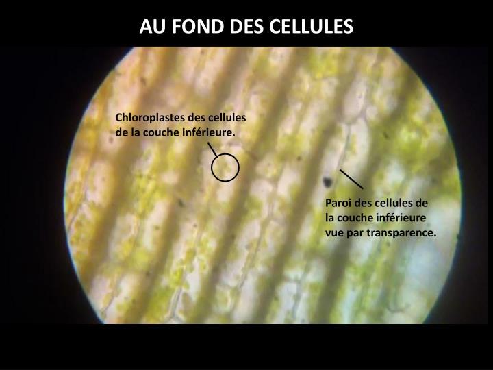 AU FOND DES CELLULES