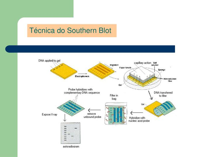 Técnica do Southern Blot