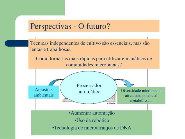 Perspectivas - O futuro?