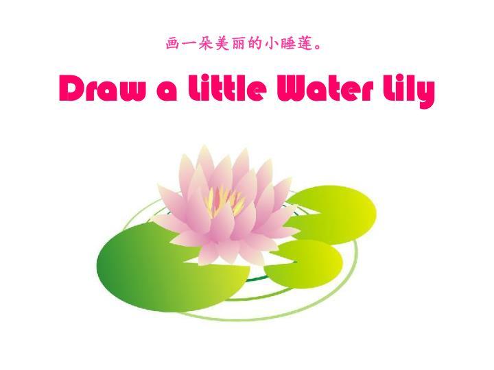 画一朵美丽的小睡莲。