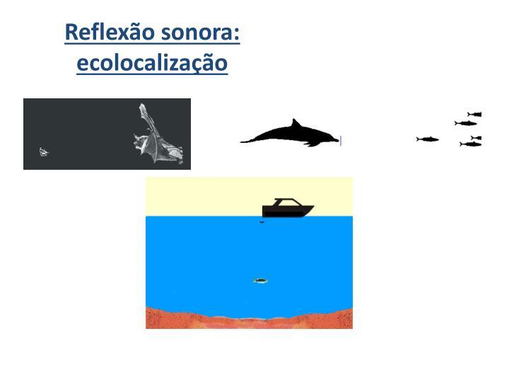 Reflexão sonora: ecolocalização