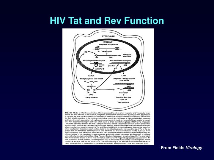 HIV Tat and Rev Function