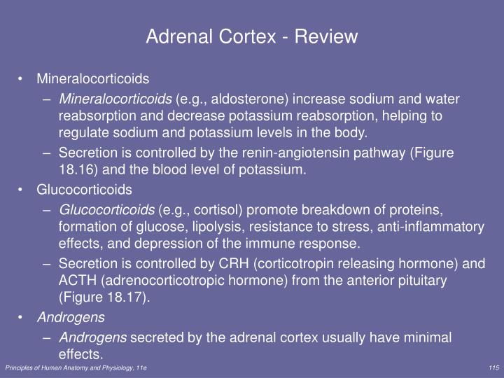 Adrenal Cortex - Review