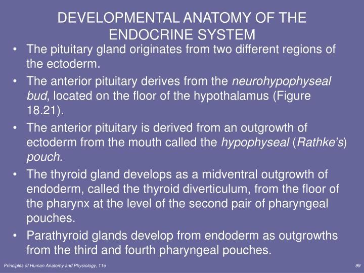 DEVELOPMENTAL ANATOMY OF THE ENDOCRINE SYSTEM