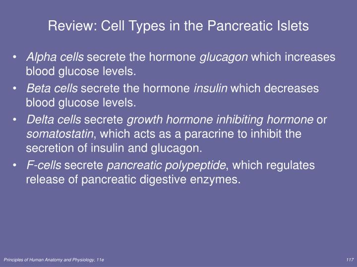 Review: Cell Types in the Pancreatic Islets