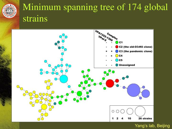 Minimum spanning tree of 174 global strains