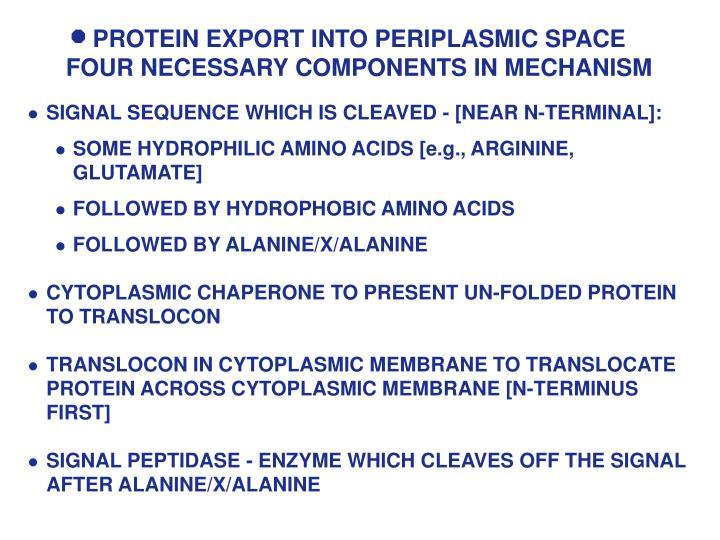 PROTEIN EXPORT INTO PERIPLASMIC SPACE FOUR NECESSARY COMPONENTS IN MECHANISM