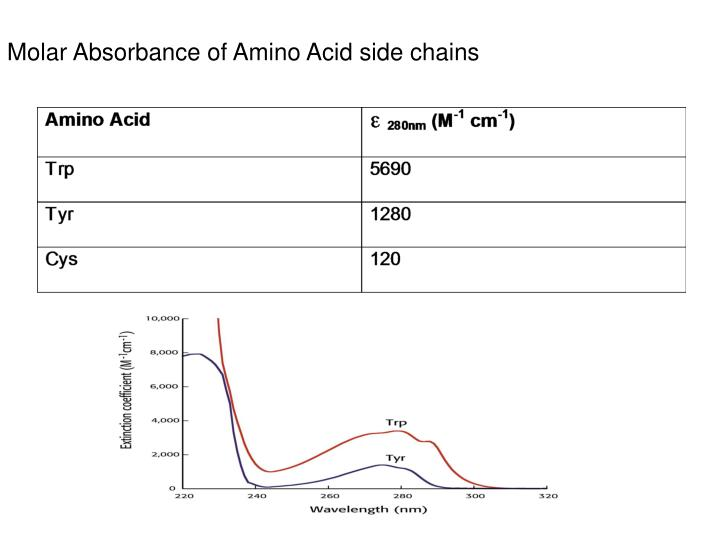 Molar Absorbance of Amino Acid side chains