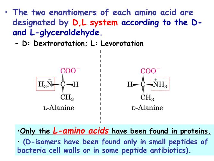 The two enantiomers of each amino acid are designated by