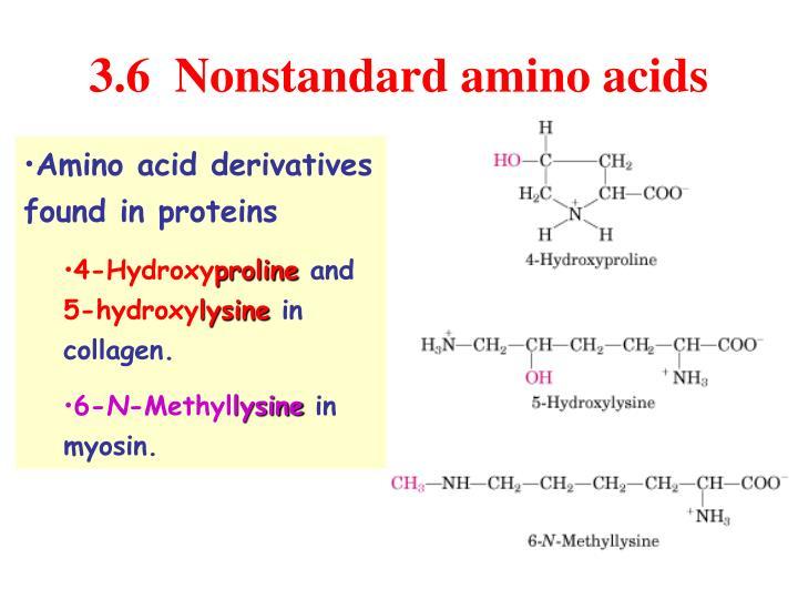 3.6  Nonstandard amino acids
