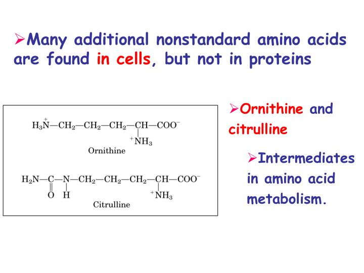 Many additional nonstandard amino acids are found