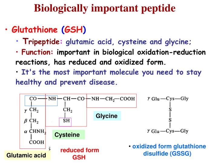 Biologically important peptide