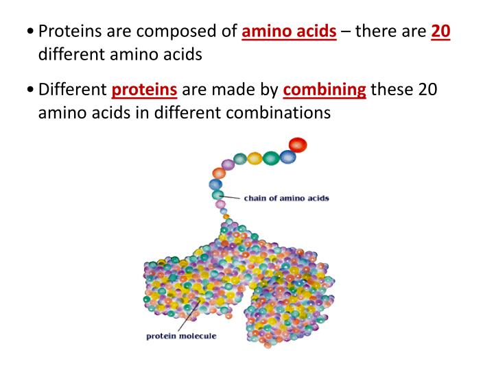 Proteins are composed of