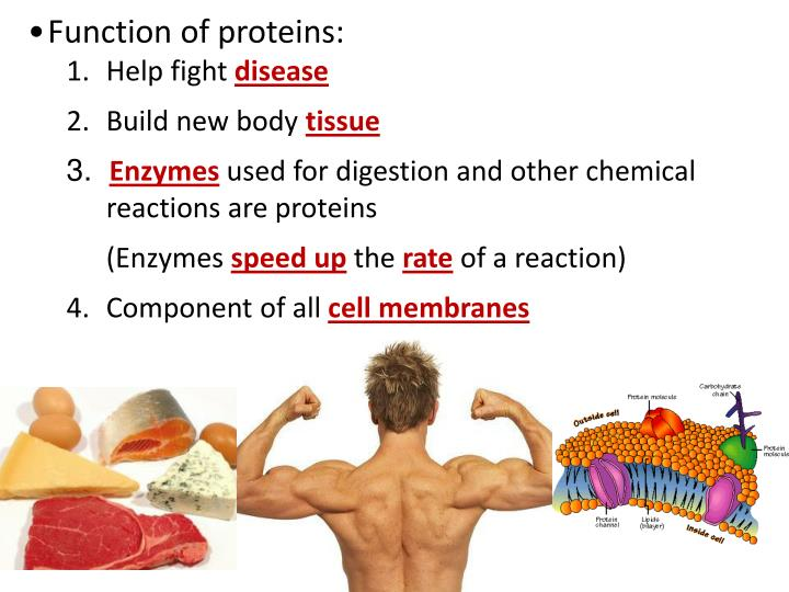 Function of proteins: