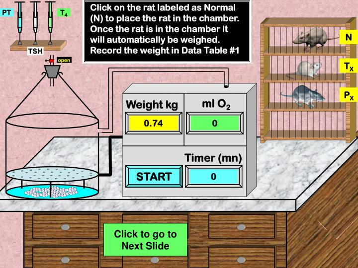Click on the rat labeled as Normal (N) to place the rat in the chamber. Once the rat is in the chamber it will automatically be weighed. Record the weight in Data Table #1