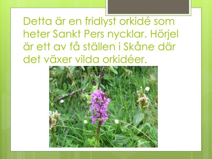 Detta är en fridlyst orkidé som heter Sankt Pers nycklar. Hörjel är ett av få ställen i Skåne där det växer vilda orkidéer.