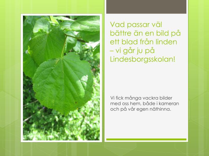 Vad passar väl bättre än en bild på ett blad från linden – vi går ju på Lindesborgsskolan!