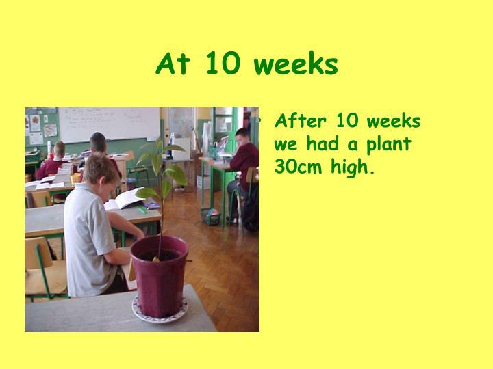 At 10 weeks
