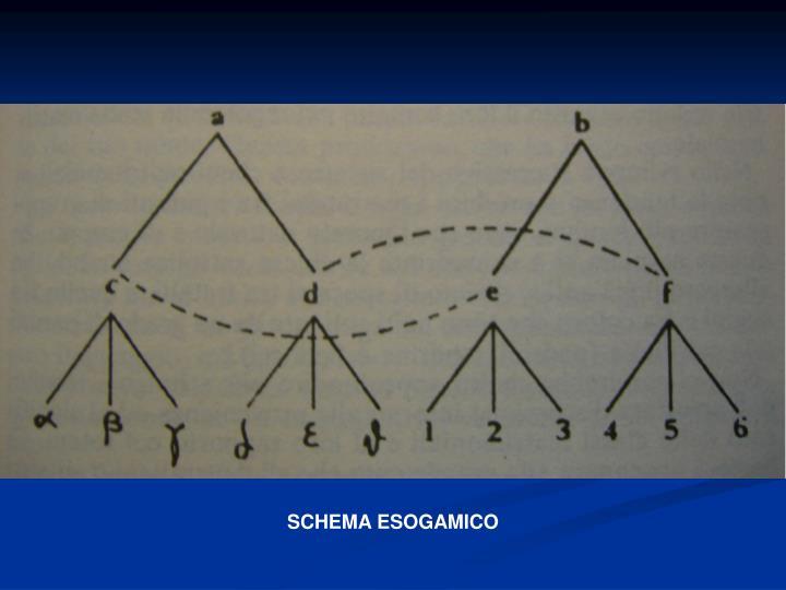 SCHEMA ESOGAMICO