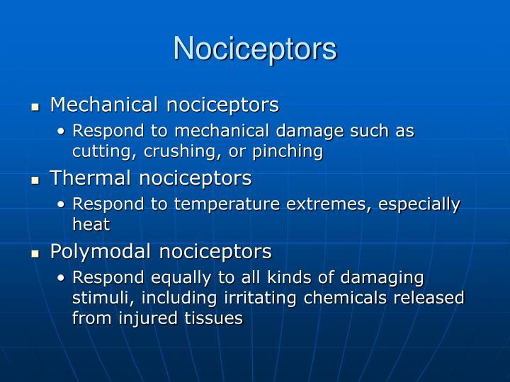 Nociceptors