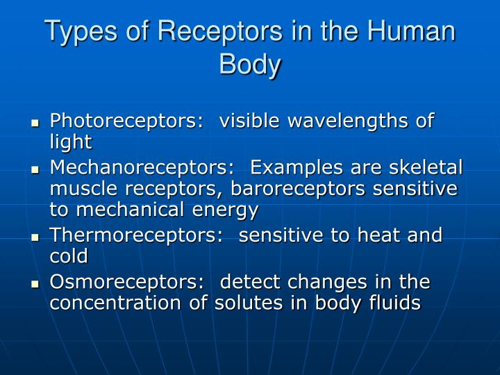 Types of Receptors in the Human Body