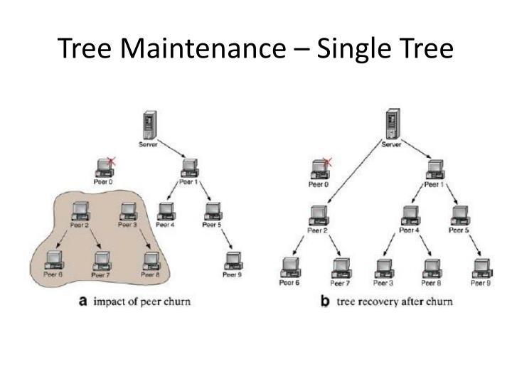 Tree Maintenance – Single Tree