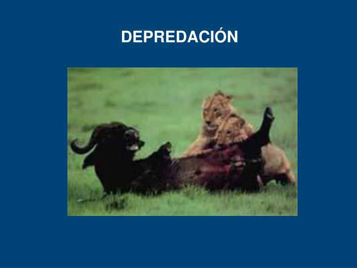 DEPREDACIÓN