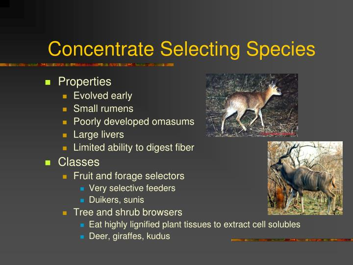 Concentrate Selecting Species