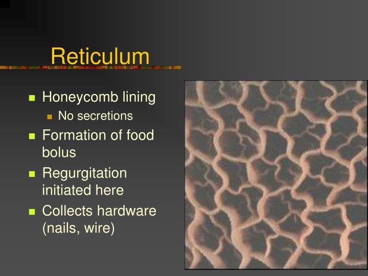 Reticulum