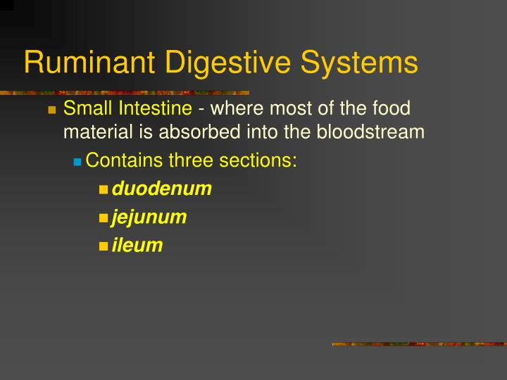 Ruminant Digestive Systems