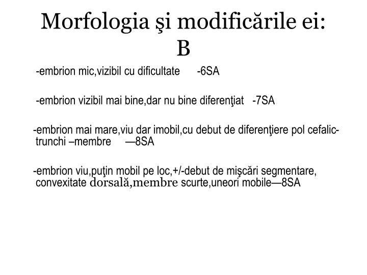 Morfologia şi modificările ei: