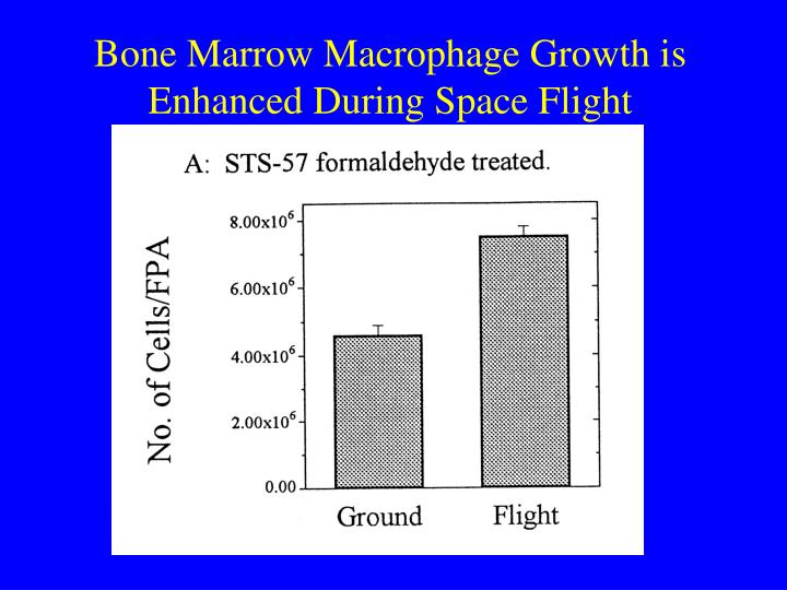 Bone Marrow Macrophage Growth is Enhanced During Space Flight