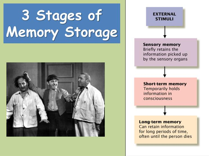 3 Stages of Memory Storage