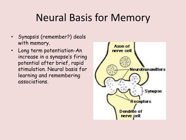 Neural Basis for Memory