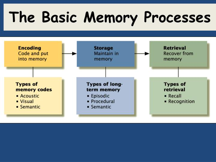 The Basic Memory Processes