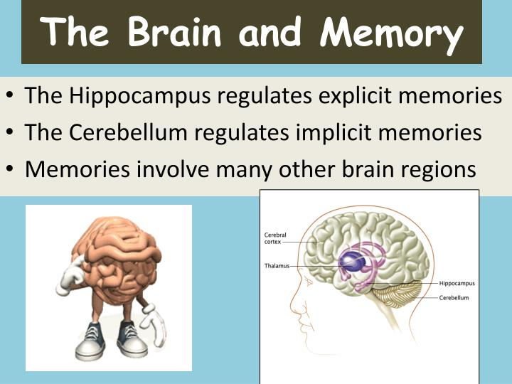 The Brain and Memory
