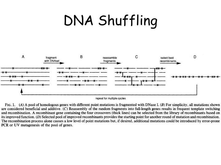DNA Shuffling
