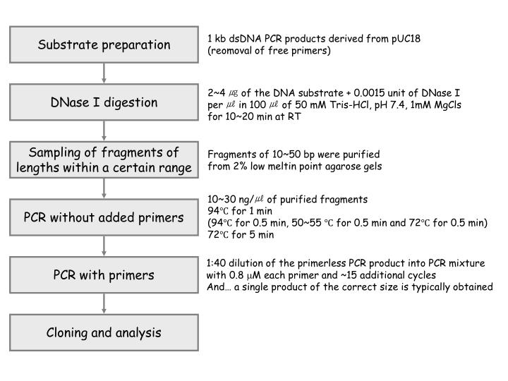 1 kb dsDNA PCR products derived from pUC18
