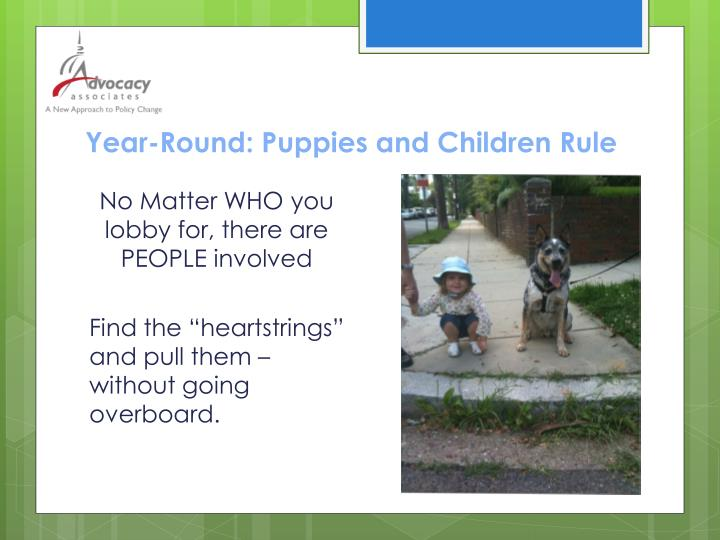 Year-Round: Puppies and Children Rule
