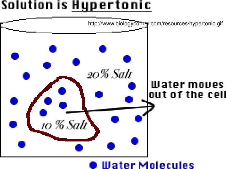 http://www.biologycorner.com/resources/hypertonic.gif
