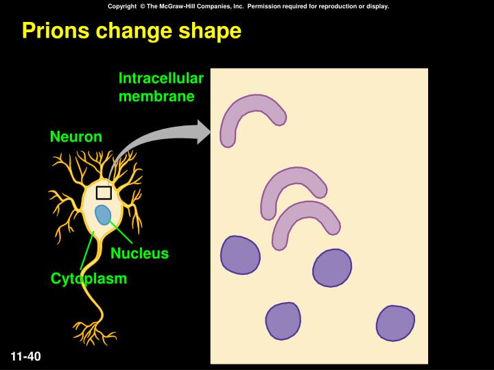 Prions change shape