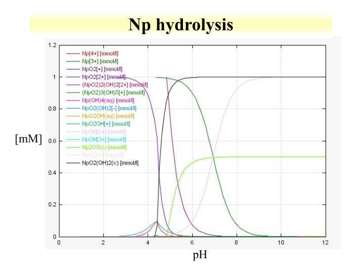 Np hydrolysis