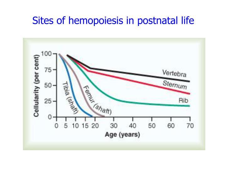 Sites of hemopoiesis in postnatal life
